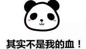 熊猫型血女生性格特点解析