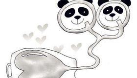 熊猫型血女人和熊猫型血男人配对情况解析