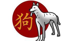 属狗熊猫型血的性格有什么特点