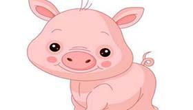 属猪天蝎座A型血的人性格有什么特征