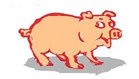 属猪水瓶座A型血的人性格有什么特征