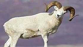 属羊双鱼座A型血的人性格有什么特征