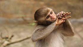 属猴双鱼座B型血的人性格有什么特征