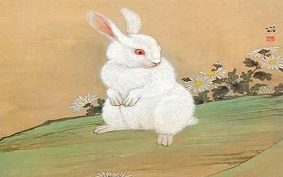 属兔双鱼座O型血的人性格有什么特征