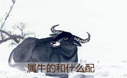 属牛的人和什么属相最配