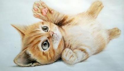 开车压死猫有什么说法吗 怎么化解