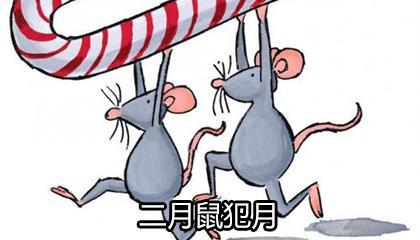 二月鼠犯月是迷信吗 为什么说二月的老鼠不好