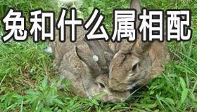 男属兔和什么属相最配