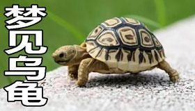 梦见乌龟怎么回事 是好兆头吗