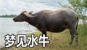 做梦梦见水牛是什么征兆 说明什么