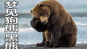 做梦梦见狗熊 黑熊怎么回事 有什么征兆