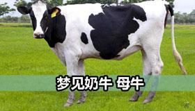 梦见奶牛 母牛是好事吗 有好兆头吗