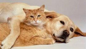 养什么动物能招来财运呢