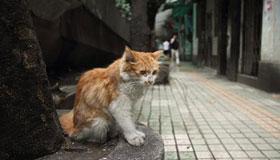 收养流浪猫对风水会不会不吉利
