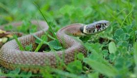 亥时出生的属蛇人命运分析