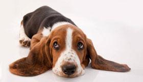 农历二月出生的属狗人性格与命运