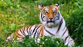农历二月出生的属虎人命运