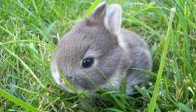 农历11月出生的属兔人命运