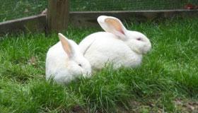 农历一月出生的属兔人命运如何