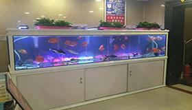 门面店的鱼缸摆放风水解析