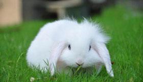 农历二月出生的属兔人命运