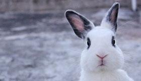 农历五月出生的属兔人命运