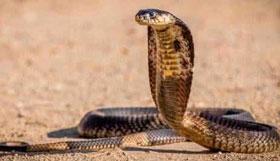 农历12月出生的属蛇人命运