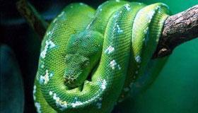 农历7月份出生的属蛇人命运