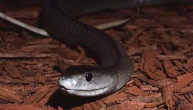 农历十月出生的属蛇人运势如何