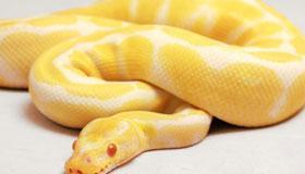 农历二月出生的属蛇人命运