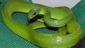 农历八月出生的属蛇人命运