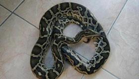 农历九月出生的属蛇人命运