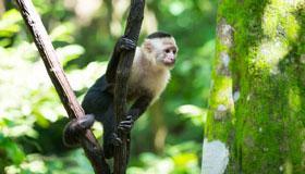 农历12月出生的属猴人命运怎样