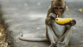 农历9月出生的属猴人运势如何