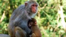 农历6月出生的属猴人运势