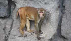 农历5月出生的属猴人命运