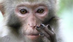 农历2月份出生的属猴人命运