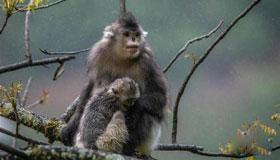 农历8月出生的属猴人命运
