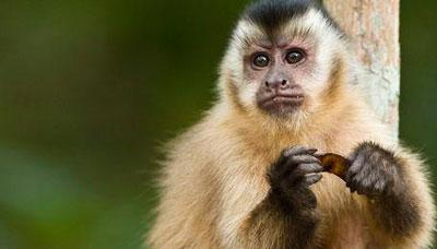 1968年属猴人的婚姻命运