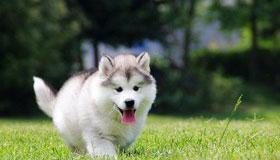 农历三月出生的属狗人性格与命运