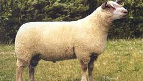 农历二月出生的属羊人命运