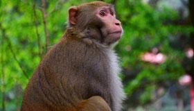 1980年出生的41岁属猴人2021年运程
