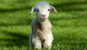 1991年出生的30岁属羊人2021年运势