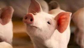 农历五月份出生的属猪人运势