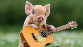农历10月份出生的属猪人命运如何