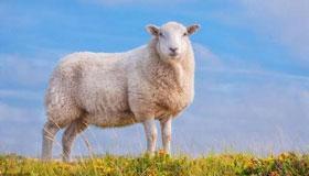 1967年出生的54岁属羊人2021年运程