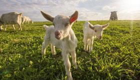 2003年出生的18岁属羊女2021年运势