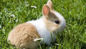 1975年出生的46岁属兔人2021年运势