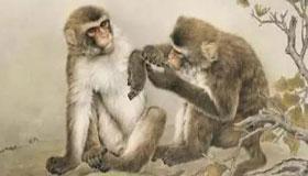 1968年出生的53岁属猴人2021年运势及运程