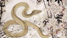 1965年出生在2021年的56岁属蛇人运程如何